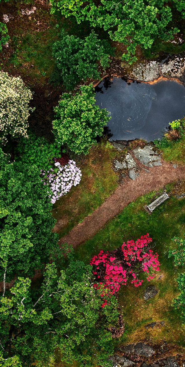 Översiktsbild, parkmiljö vid Göteborgs universitet
