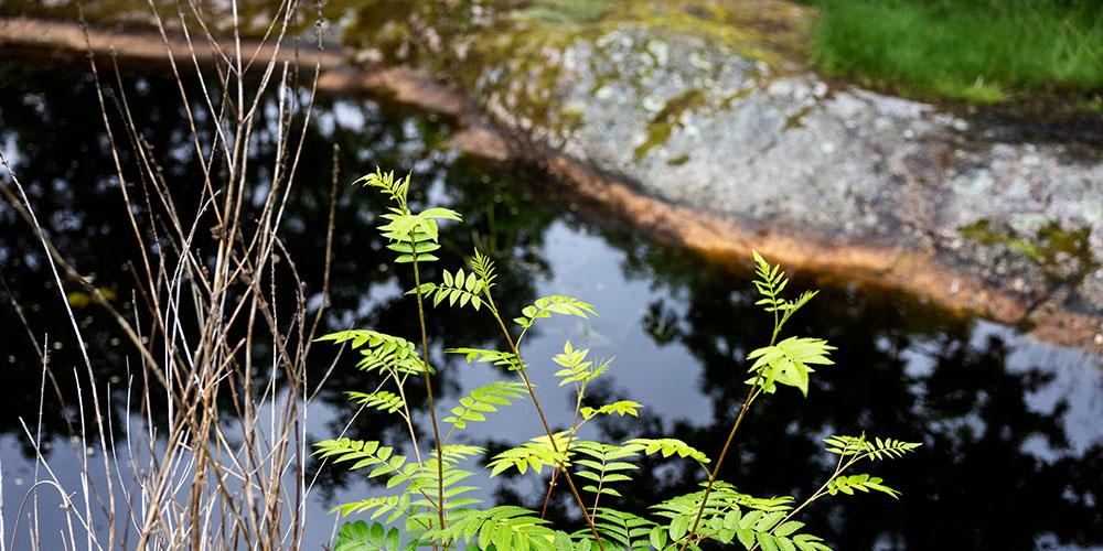 Bild på växt och vatten.